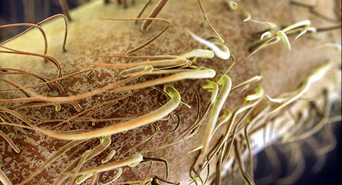 Mitochondria_500x270